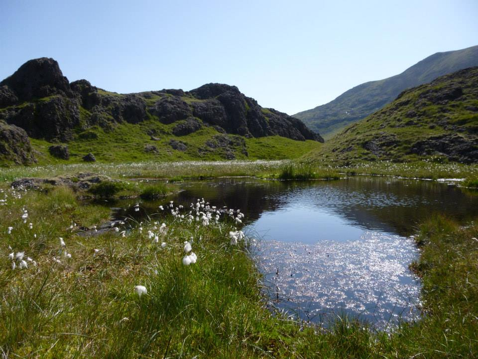 Pool below Moel Hebog