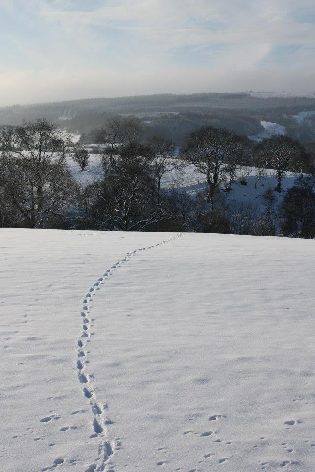 Footsteps near Fernilee